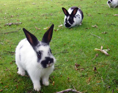 uvic bunny