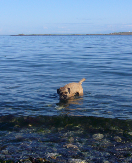 Gus in the water