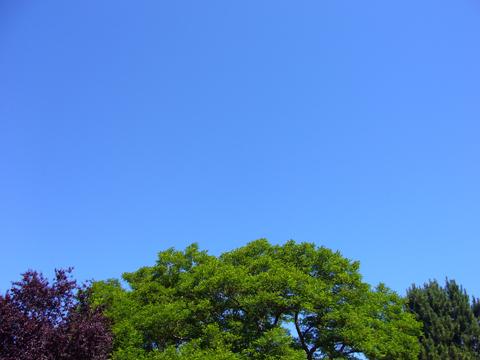 vicotira blue sky