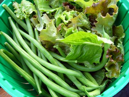 インゲン豆とレタス