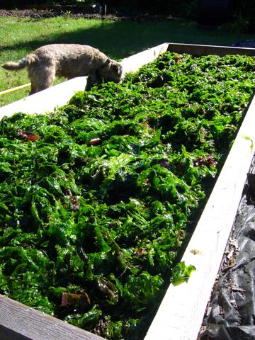 海藻と野菜畑