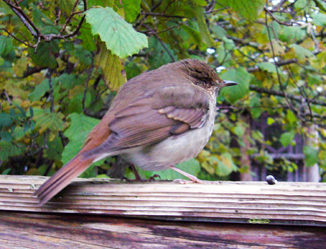 片目の小鳥