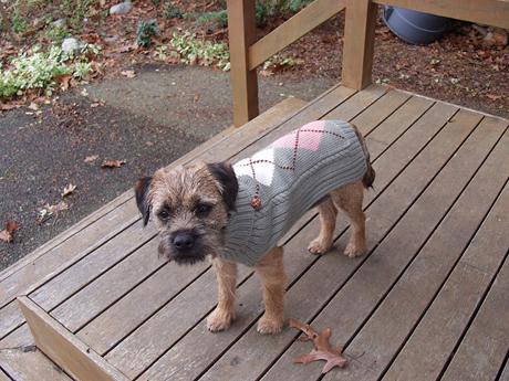 そして、こちらのセーターも(これも from my sister-in-law)。