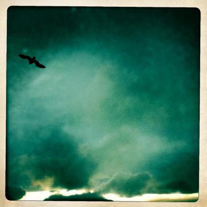 強風のカモメ