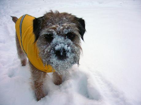 雪で遊ぶGus