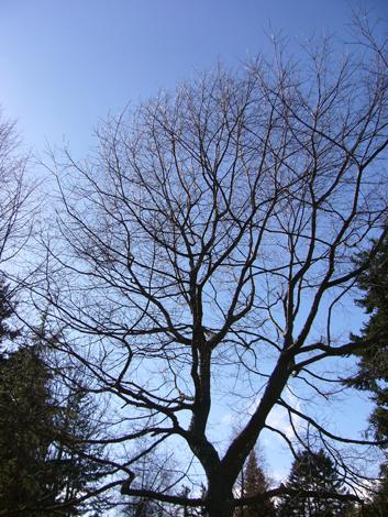 冬の晴れた日