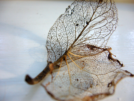skelton-leaf