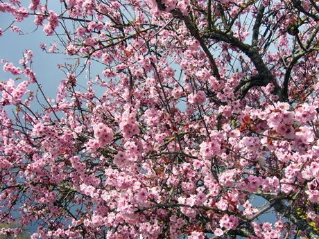 ビクトリアの春