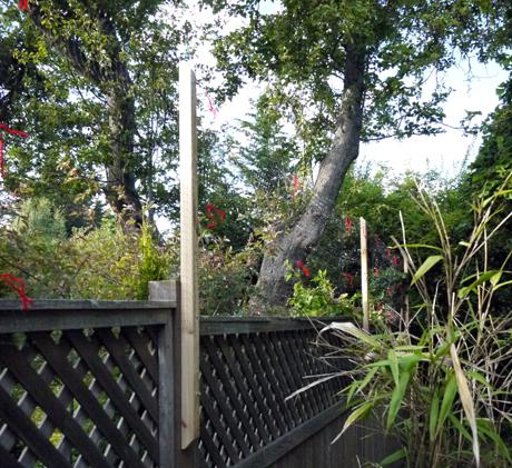 この注ぎ足した支柱の間に「Deer Net(鹿よけ用の網)」をはりつける。