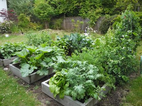 7月の野菜畑