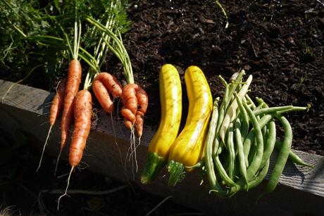 庭野菜2011
