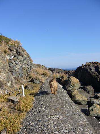 ビクトリアの海岸散歩