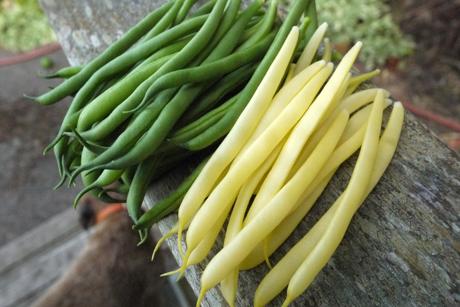 緑と黄色のいんげん豆