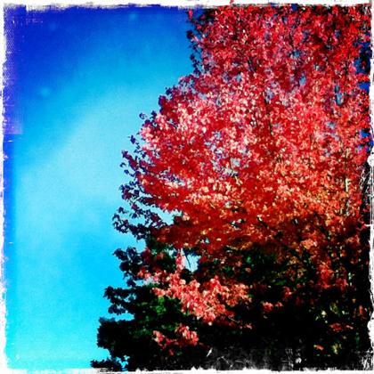 秋色のUVic