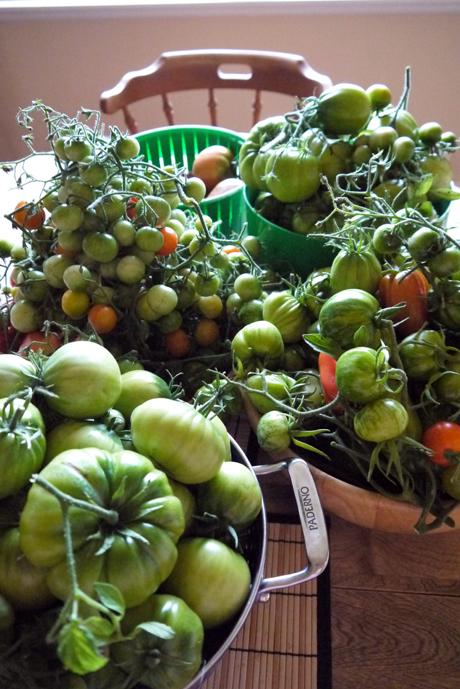 緑のトマトの
