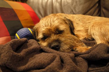 sleepy Gus