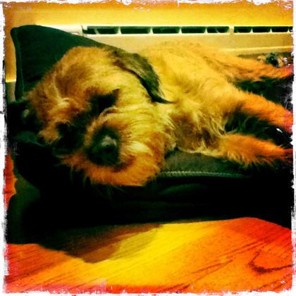 Gus寝る