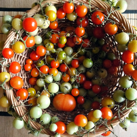 トマトのリース