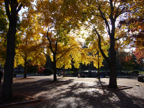 秋のキャンパス