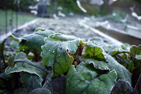 凍りついた朝