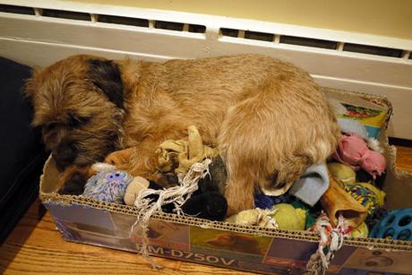 Gusのおもちゃ箱