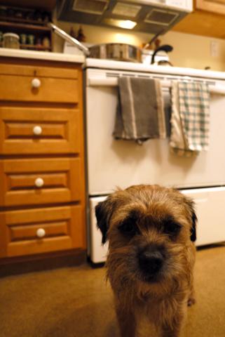 Gus ご飯待ち