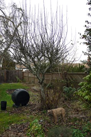 冬の庭のGus