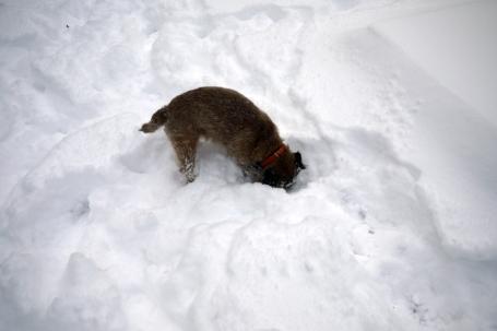雪の日のGus