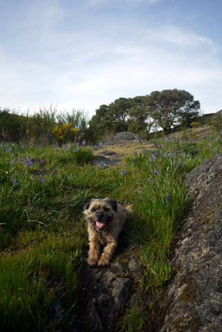 丘の上の野の花