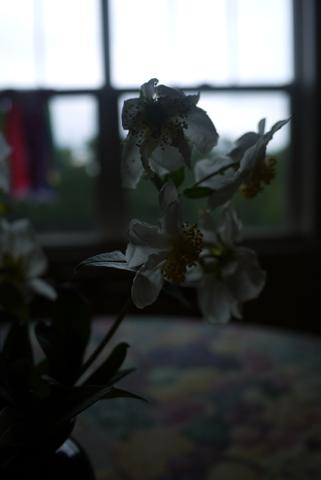 シトラス系の花
