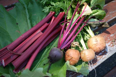 7月終わりの庭野菜