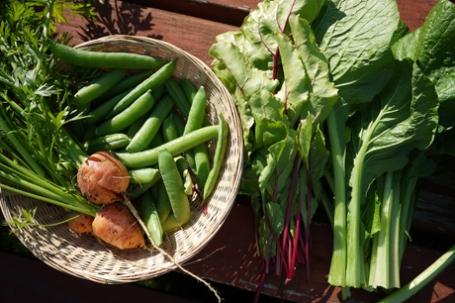 7月の野菜