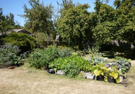 ビクトリア8月半ばの庭2012