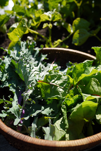 2012年庭野菜